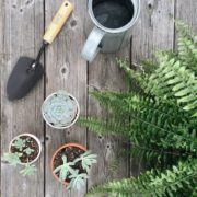 increasing-home-value-plants